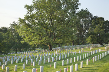 Gravestones below beautiful tree in Arlington National Cemetery
