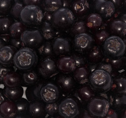 black ashberry isolated