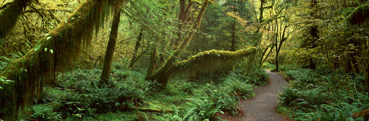 Aluminium Prints Road in forest Hoh Rainforest, Olympic National Park, Washington