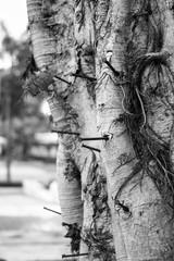 nail on a tree