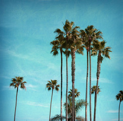 aged and worn vintage photo of palm trees