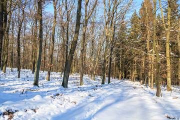 Winterlicher Forstweg im Mischwald