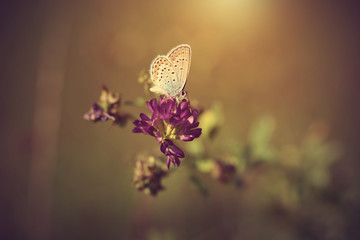 Vintage photo of a butterfly at sunset