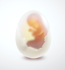 embryo in the egg