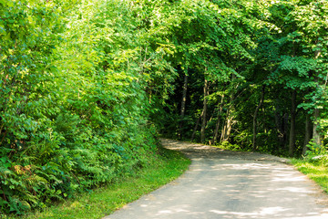 road in to the forest
