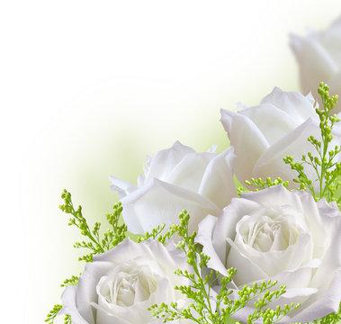 Beautiful white roses border isolated on white background