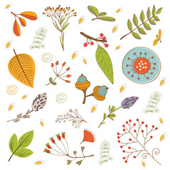 Autumn foliage set with twigs, flowers and leaves