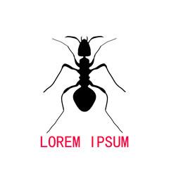 Black silhouette of ant, logo design. vector