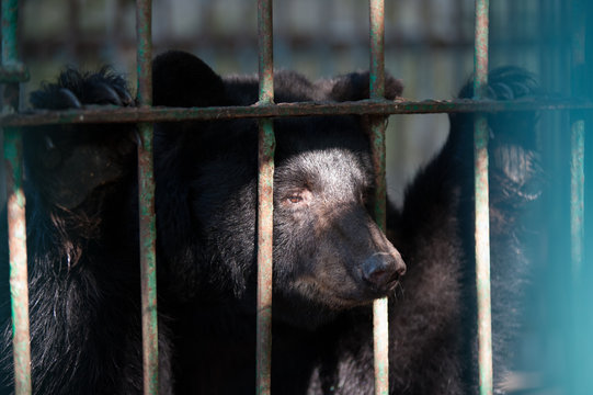 sad bear in a cage