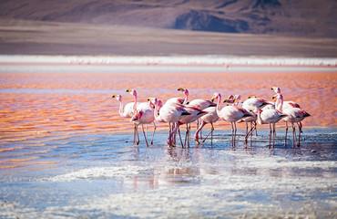 Laguna Colorada Boliwia