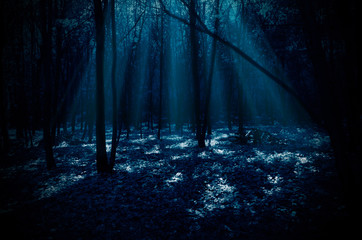 Fototapete - Night forest