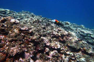 岩礁の熱帯魚