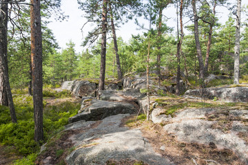 Pine tree forest and rocks