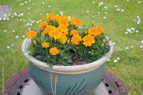 Bunte Gartenblumen Auf Einem Kanaldeckel Stockfotos Und Lizenzfreie