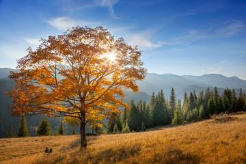 Golden Tree in Mountains valley, autumn season landscape