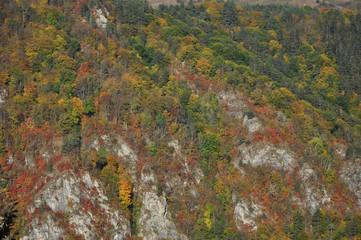 Autumn fall foliage