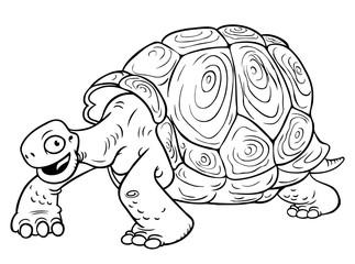 Cartoon Turtle on White Background