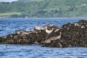 Foche sull'isola di Skye