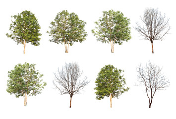 set of eight green trees and dead trees isolated on white backgr