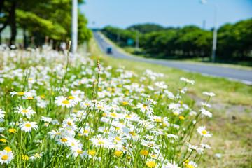 The Nature of Jeju Island in Korea