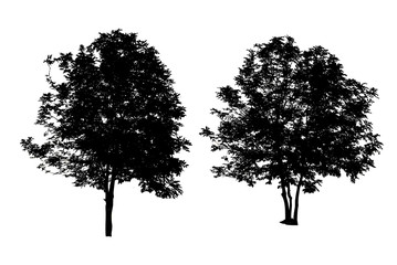 set of two trees silhouettes isolated on white background with c