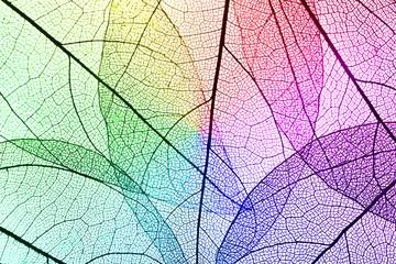 Spoed Fotobehang Decoratief nervenblad Multicolor decorative skeleton leaves background
