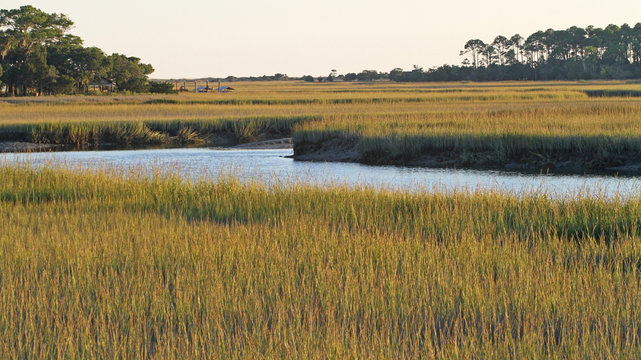 South Carolina Salt Marsh