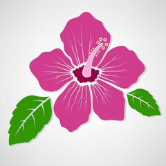 Hibiscus flower concept illustration