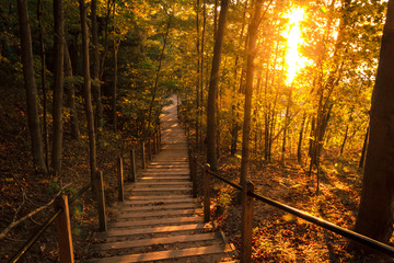 Tranquil Forest Path at Sunset. Inviting Natural Beauty with Attractive Copy Space.