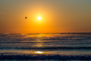 Möwe im Sonnenaufgang