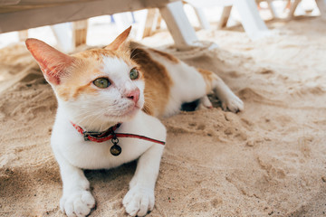 Cat lying on beach and looking at somewhere