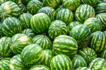 Screensaver from heap of bright green watermelons