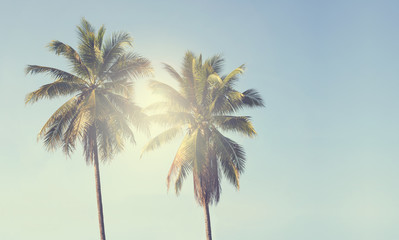 Vintage coconut palm tree on beach blue sky with sunlight of morning in summer, instagram filter