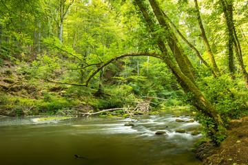 Bachlauf der Prüm an den Irreler Wasserfällen mit moosbeachsenen Steinen und Bäumen