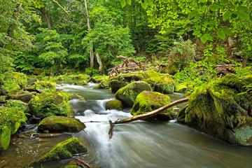Bachlauf der Prüm an den Irreler Wasserfällen mit moosbewachsenen Steinen und Felsen