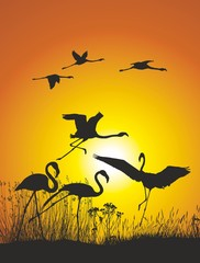 Vector illustration silhouettes flamingos in nature and sunset
