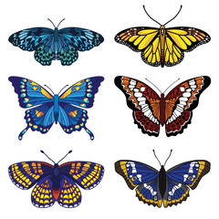 set with isolated butterflies