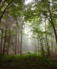 morgentlicher Nebel im Wald