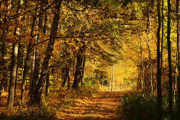 Sunny colorful autumn, forest road