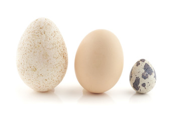 A hen egg, turkey egg and a quail egg.