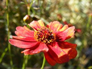 Fiore al sole