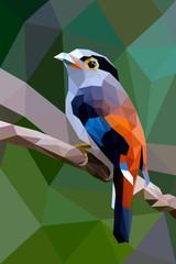Bird polygon