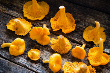 Fresh chanterelle on a wooden background side view