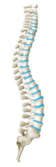 Spine diagram showing back pain