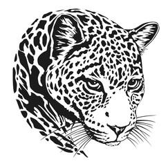 jaguar head lineart