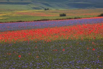 Castelluccio di Norcia: bellissimi colori