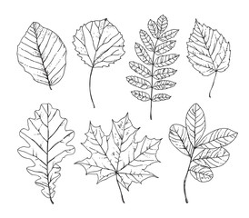 Sketch leaves hand drawn. Autumn leaves, trees, plants, nature