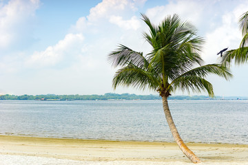Palm tree at the beach with clear blue sky