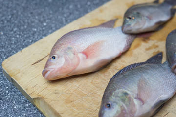 Tilapia fish freshly cought