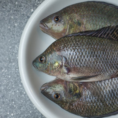 three tasty tilapia freshly cought